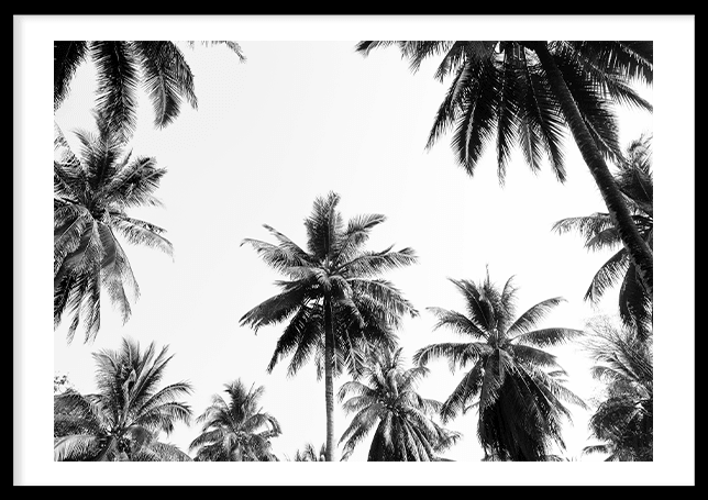 Underneath the palm trees
